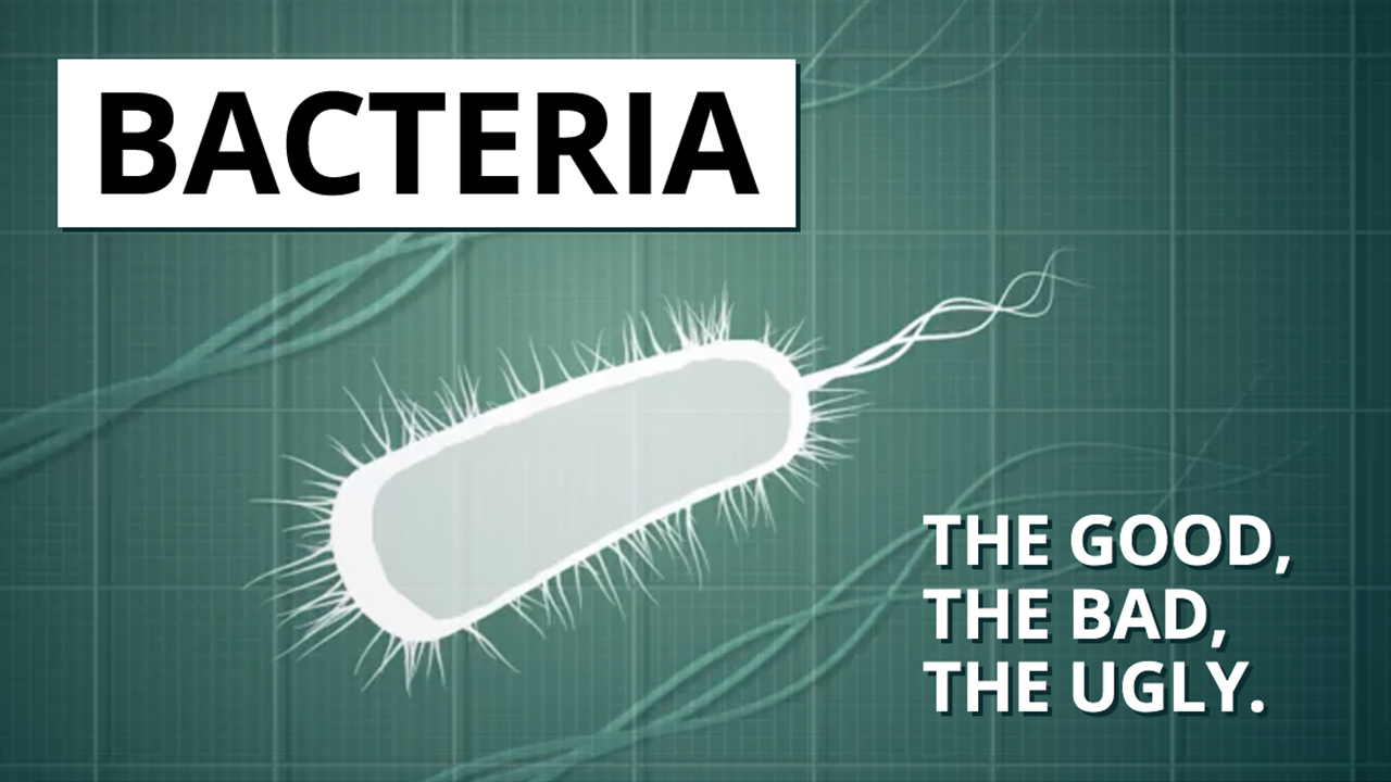 Bacteria - the good the bad the ugly